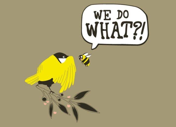 bird bees